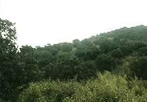 红豆杉酵素浴无锡种植基地